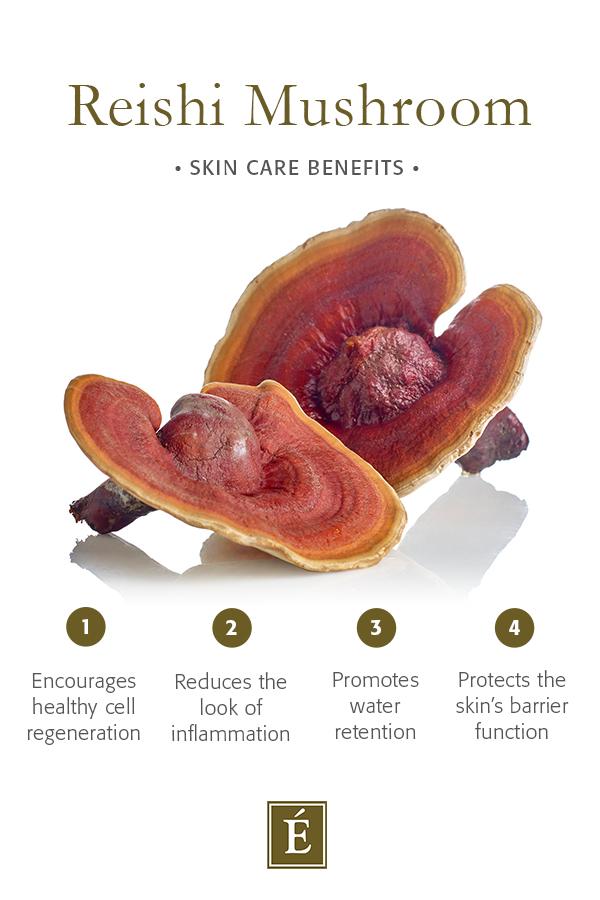 reishi mushroom benefits infographic