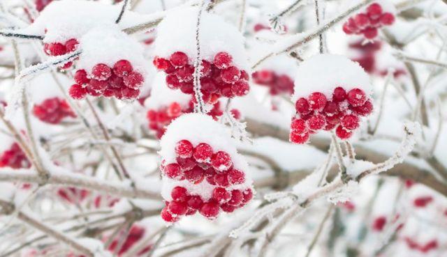 williamsburg-beauty-spa-organics-beauty-benefits-cranberries